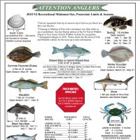 NJ Recreational Minimum Fish Size